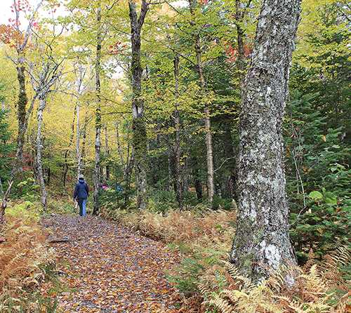 Nova Scotia Hiking Trails: Coxheath Hills Is An Awesome Spot For Hiking In Cape Breton