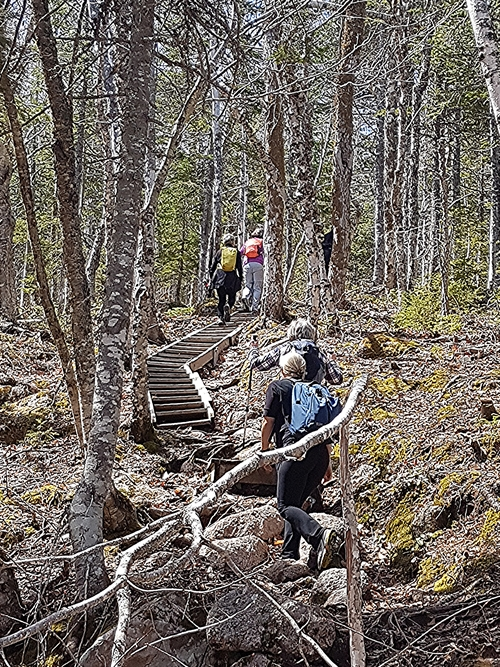 The Franey Mountain hiking trail is well maintained with several sets of stairs to help with the steady climb. Cape Breton Highlands National park.