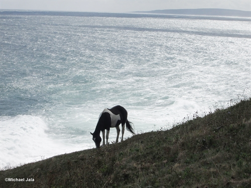 A gorgeous image of a lone wild horse against the backdrop of the Atlantic ocean on the Money Point hiking trail in northern Cape Breton.