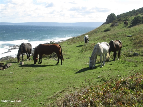 Yes, there are beautiful wild horses at Money Point.
