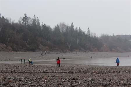 The beach at Wasson Bluff along the Bay of Fundy in Nova Scotia.  Rich in fossils and minerals.