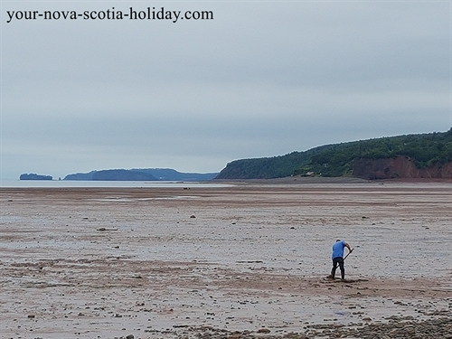 A great pasttime for folks along the Bay of Fundy in Nova Scotia....digging for clams at low tide.