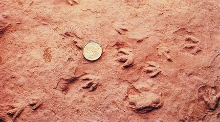 These are the world's smallest dinosaur tracks found at Wasson Bluff (Nova Scotia) in 1984. It was a 3-toed footprint made by a theropod dinosaur about the size of a robin.