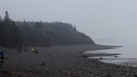 A foggy and rainy day looking for fossils and minerals at Wasson Bluff in Nova Scotia.