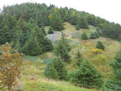 nearing the top of steep mountain in Mabou Highlands